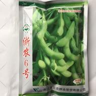 (種子花園)春毛豆種子浙農6號毛豆種子春大豆種子黃豆種子蔬菜種子500克熱賣 廠家直銷