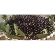 50pcs-Bayleaf/Laurel Seeds