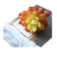 Tian ดอกไม้ปลอมไม้อวบน้ำ,ของตกแต่งภูมิทัศน์ไมโครๆติดผนังต้นไม้ในร่ม
