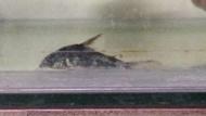 極火蝦20隻玫瑰蝦50隻 紅琉琉蝦20隻龍頭孔雀魚20隻蛇花孔雀魚20隻電光孔雀魚30隻