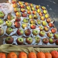 梨山蜜蘋果