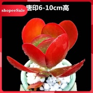 succulents Succulents new pots containing soil and succulent green plants combination potted office indoor fleshy plants