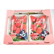 🇯🇵日本-熊本草莓🍓