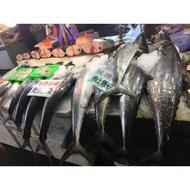 澎湖現撈土魠魚