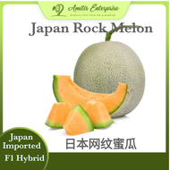 *NEW* 3 seeds Japan Rock Melon 日本网纹蜜瓜 Imported from Japan Genuine and Premium Seeds