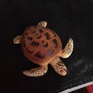 扭蛋 海龜橘色的海龜