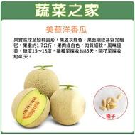 【蔬菜之家】大包裝I12.美華洋香瓜種子(哈密瓜)20顆