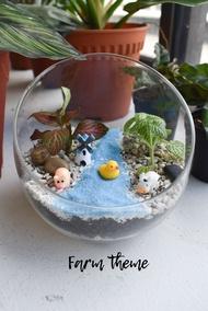 Fittonia terrarium DIY kit