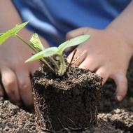 ดินปลูก ต้นไม้ พืช ผัก ไม้ดอก ดินแคคตัส ดินพร้อมปลูก ดินเพาะกล้า สูตรออแกนิค ดินปลูกต้นไม้ ดินปลูกไม้อวบน้ำ ดินปลูกกระบองเพชร ดินผสม