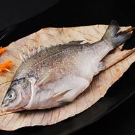 貴妃魚400g/尾(澳洲銀鱸國寶魚) | 台灣好漁