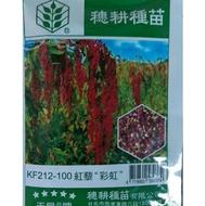 茂豐~種子   紅藜  台灣紅藜    台灣藜 Chenopodium formosanum 彩虹米  原廠包裝