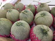 香華洋香瓜種子。哈蜜瓜種子:家坤種子專賣店