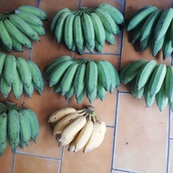 《最新品種》蜜香蕉,密蕉,山蕉,種苗,觀赏花種苗,(夯)黃金果種苗。高海拔種植,Q香蕉,舔度高,CP值高產品。