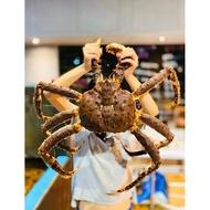 【一井水產】 日本空運 蟹中之王 活帝王蟹 活體鱈場蟹 保證新鮮 秤重計價 4公斤 特大賣場