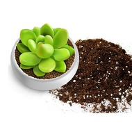 Green plants, fleshy flowers, potted plants, nutritious soil, containing vermicu