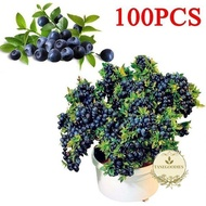 100Pcs Blueberry Tree Seed Fruit Blueberry Seed Potted Bonsai Seeds Plant