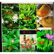 越南減肥茶-Vytea-1盒455$現貨