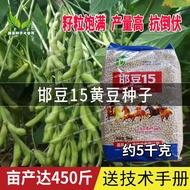 種子批發 俊豪邯豆15黃豆種子 大田高產非轉基因榨油毛豆大豆種籽 高蛋白 高產量 折扣優惠