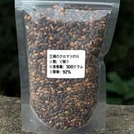 日本三河黑松種子