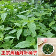 Hemp Leaf Seeds Authentic Chaoshan Specialty Red  Seeds Hemp Leaf Vegetable Hemp Leaf Chaoshan Cold Mixed Green and Whit