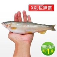 【優鮮配】宜蘭特選巨無霸XXL爆卵母香魚1盒(5尾/920g/盒)