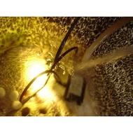 【路卡傢飾~園藝造景】魚缸 038L 流水組 抽水幫浦 抽水馬達 水盆 魚池 豆燈 景觀用品