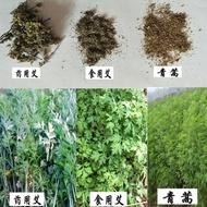艾草種籽 藥用四季種野生艾蒿食用艾葉五月斬艾種植防蟲青蒿種子