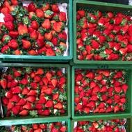 大湖草莓2號一籃2.5斤