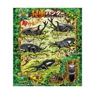 單售1號&4號~仿真昆蟲盒玩~全新日版 F-Toys 昆蟲獵人 甲蟲 x 鍬形蟲