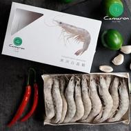 【卡馬龍】超大尾無毒鮮甜白晶蝦3盒(500g/盒)
