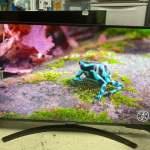 "LG 43"" UP8100 4K Smart TV 智能電視 (約三年原廠保養)"