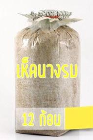 ก้อนเชื้อเห็ดนางรม (12 ก้อน)