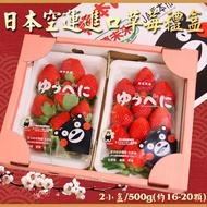 日本熊本草莓福岡草莓