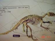 變形金剛**侏儸紀恐龍骨.標本.模型寶盒 禽龍 Iguanodon(恐龍王者)
