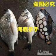 海底殺手海釣誘餌粉黑鯛烏頭誘餌打窩料浮游磯釣面魚餌料酒糟包