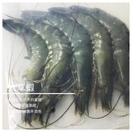 【煮客實驗室 CookerLab】大草蝦 肥豬蝦手臂蝦 無毒蝦無抗生素