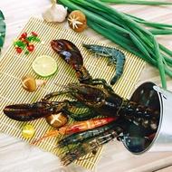 【良墨卷】活體急凍 波士頓龍蝦 巨鉗龍蝦   500g±10%/隻   暖心火鍋
