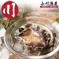 【小川漁屋】極品南非活凍帶殼鮑魚4包(500g+-10%/包/約6-8粒)