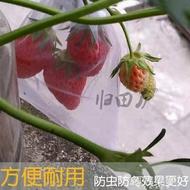 防鳥網 歸田廬葡萄火龍果草莓枇杷西紅柿無花果套袋防鳥袋子水果網袋 暖心生活館