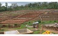 【免運特惠組 耶加雪菲 嚴選水洗咖啡豆 200g x 3包】高海拔衣索比亞豆的代表 水洗豆最高等級!