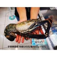 野生超大泰國蝦/稀有長手臂蝦◇$特價549元/隻/550g±10%