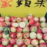 台灣梨山出產 蜜蘋果