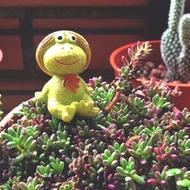 光和盆子∞療癒系【田園蛙 S】ZAKKA 雜貨 仰望天空 擺飾 鄉村 桌上 小物 佈置 動物 蛙 草帽 青蛙