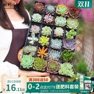 succulent planter succulent plant succulent soil seeds succulent pot plant seeds ✷Succulents Combination Potted Novice P