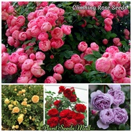 Mixed Color Climbing Rose Flower Seeds For Sale Potted Plants Indoor Ornamental Bonsai Seeds Real Plants Live Plants Air Plant Garden Flower Plant (Each pack contains 100 seeds - Seeds for Planting Flowers - Available in Philippines)