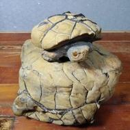 石雕大師蘇承志-黃龜甲陽紋平安龜(附收藏證書)
