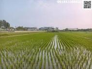 嘉義縣民雄國中都計農地430坪 適溫室或出租高架廣告牆