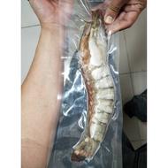 超霸氣肥豬蝦/手臂蝦 200-250公克 約30公分