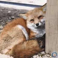 狐狸賣場 minifit