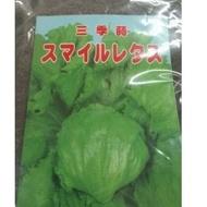 農用711 日本結球萵苣 微笑結球萵苣 美生菜 結球萵苣種子 美生菜 比大陸妹翠綠